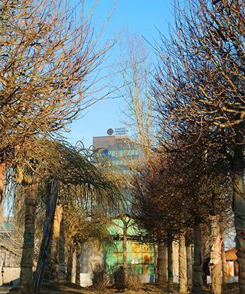 Au sosit arborii din viitorul parc al ansamblului Openville. O adevărată pădure a fost plantată în proximitate